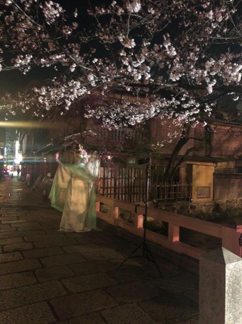 桜 サクラ SAKURA_c0108595_01494264.jpg