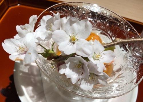桜 サクラ SAKURA_c0108595_01553271.jpg