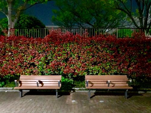 夜桜_f0061797_01261664.jpg