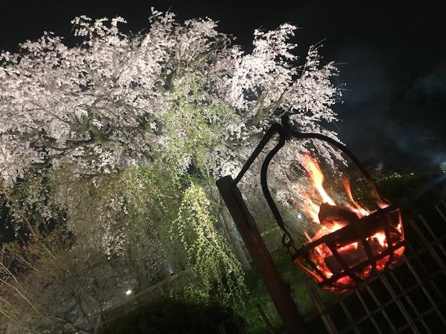 サクラ桜SAKURA。_a0050302_23064969.jpg