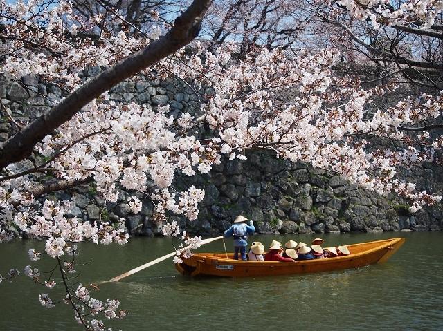 姫路城周辺の桜_e0289203_10434374.jpg