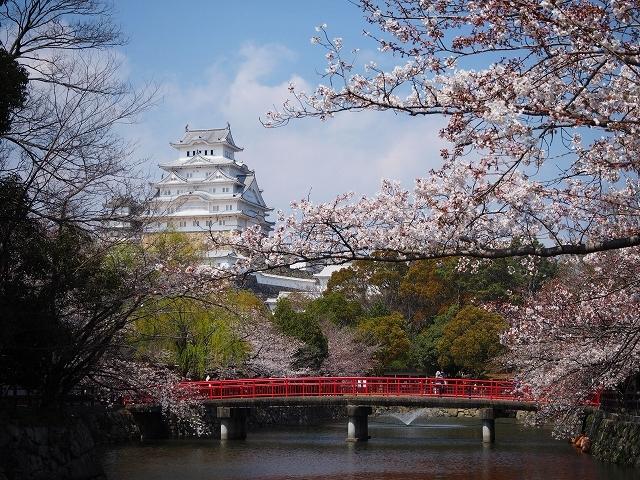 姫路城周辺の桜_e0289203_10434979.jpg