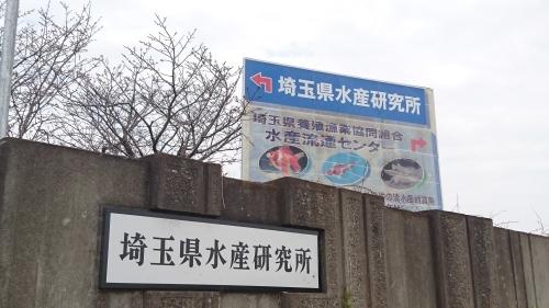 さいたま養殖魚まつり(2019春)_b0298605_02185751.jpg