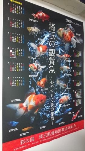 加須金魚トリートメント中。_b0298605_02232844.jpg