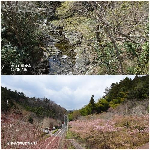 三月のお花見_c0051105_09191411.jpg