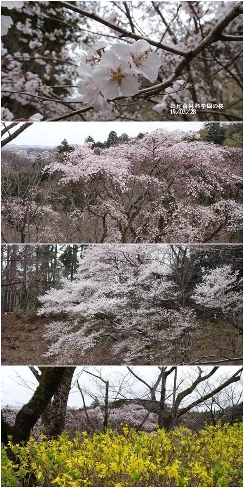 三月のお花見_c0051105_10051063.jpg