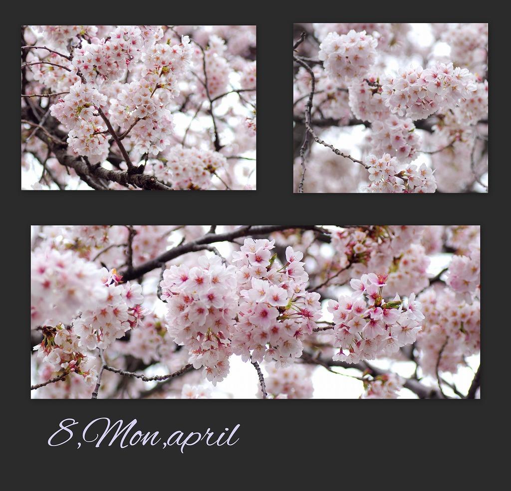 どこよりもここの桜は・・・_d0147812_1846224.jpg