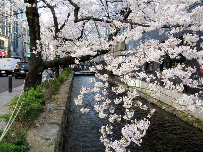 祇園新橋から高瀬川へ_e0048413_20424402.jpg