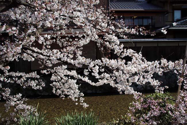 祇園新橋から高瀬川へ_e0048413_20425872.jpg