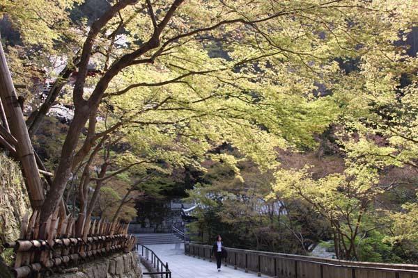桜が揃った 清水寺_e0048413_21535873.jpg