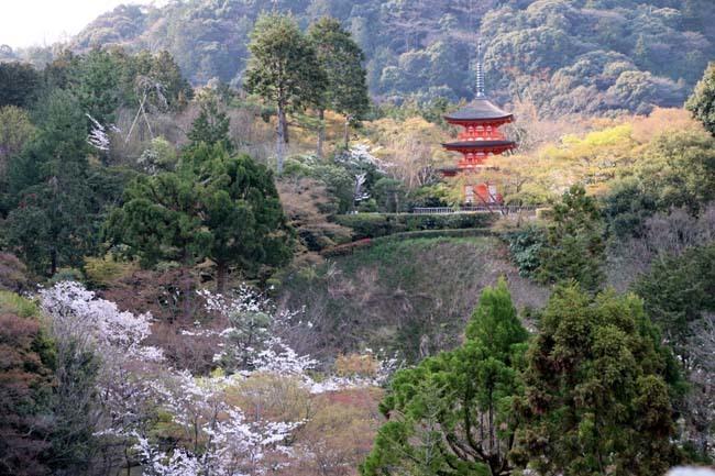 桜が揃った 清水寺_e0048413_21540172.jpg