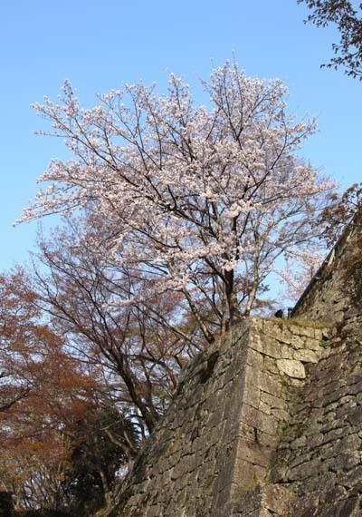 桜が揃った 清水寺_e0048413_21540876.jpg