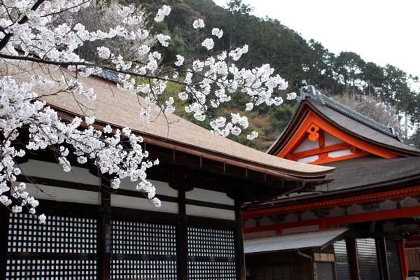 桜が揃った 清水寺_e0048413_21541052.jpg