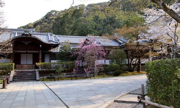桜が揃った 清水寺_e0048413_21541816.jpg