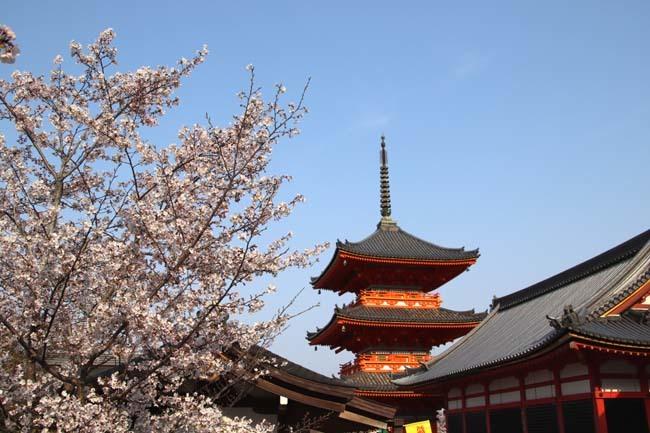 桜が揃った 清水寺_e0048413_21542633.jpg