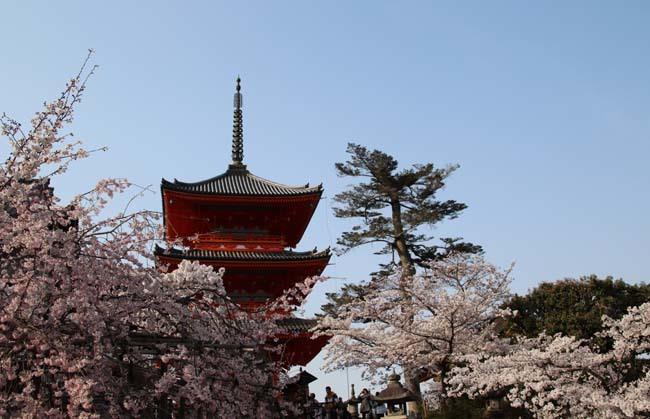 桜が揃った 清水寺_e0048413_21542978.jpg