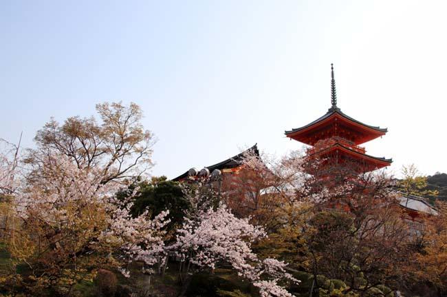 桜が揃った 清水寺_e0048413_21543200.jpg