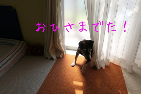 f0369014_08202582.jpg