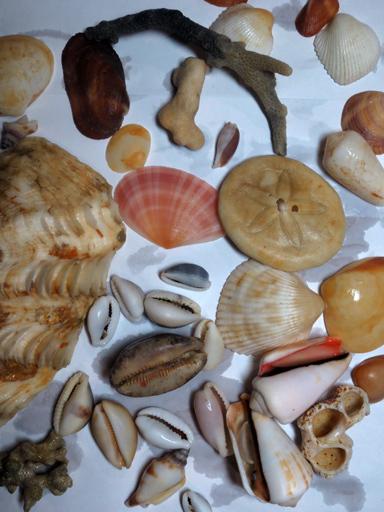 ■辺野古海岸で宝貝を探す――沖縄米軍基地ツアー_d0190217_21565836.jpg