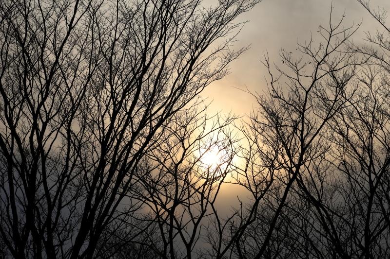 林の日暮れ_e0169421_21044824.jpg