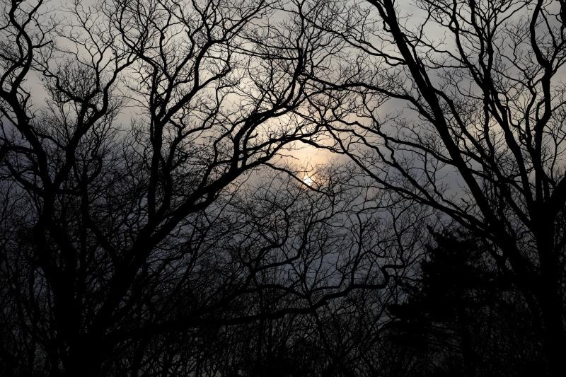 林の日暮れ_e0169421_21044912.jpg