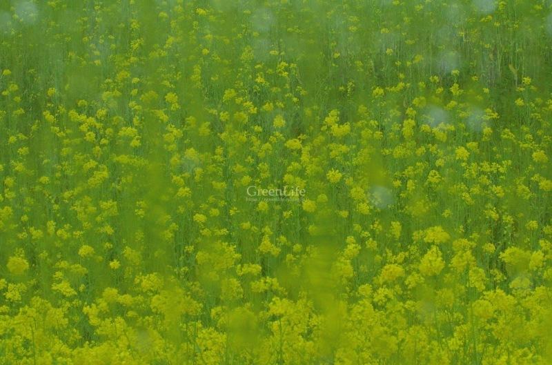 雨もまた楽し_f0321522_09101962.jpg