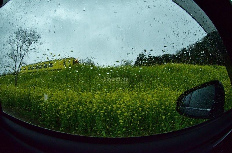 雨もまた楽し_f0321522_09115114.jpg