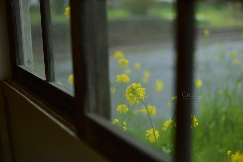 雨もまた楽し_f0321522_09223057.jpg