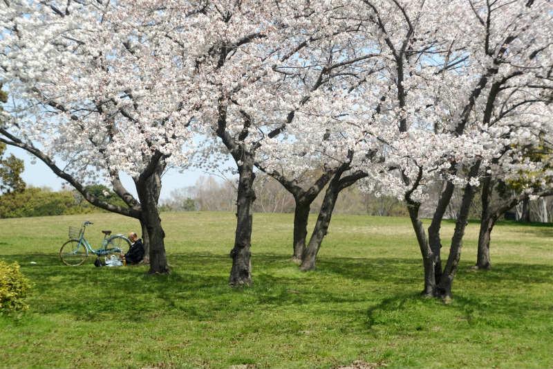 桜の下で_d0338526_16202210.jpg