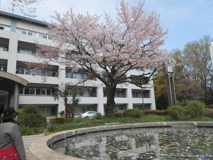 今日の野川の桜です。寒い〜。_a0095931_17093994.jpg