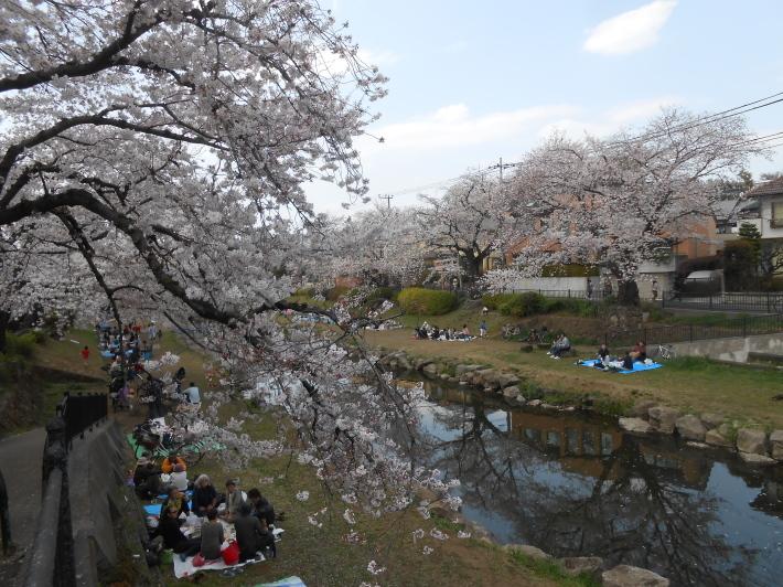 今日の野川の桜です。寒い〜。_a0095931_17183972.jpg