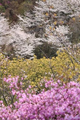 お花見登山② コラボレーション_a0345833_22182359.jpg