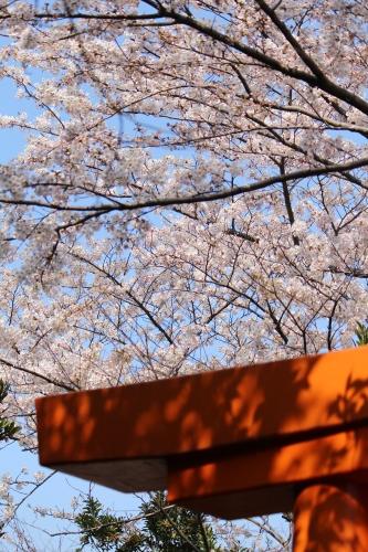 お花見登山② コラボレーション_a0345833_22310504.jpg