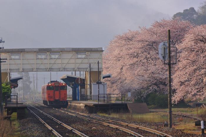 竹野駅_a0294534_19553519.jpg