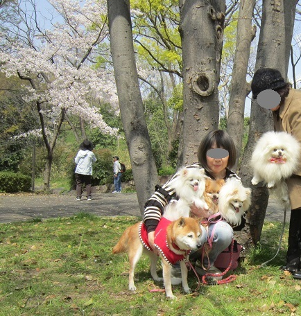 雪と桜_b0177436_22305348.jpg