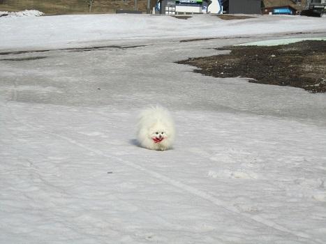 雪と桜_b0177436_22371212.jpg