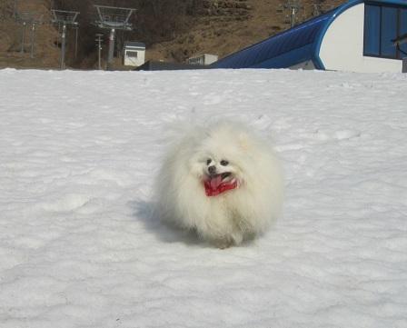 雪と桜_b0177436_22380391.jpg