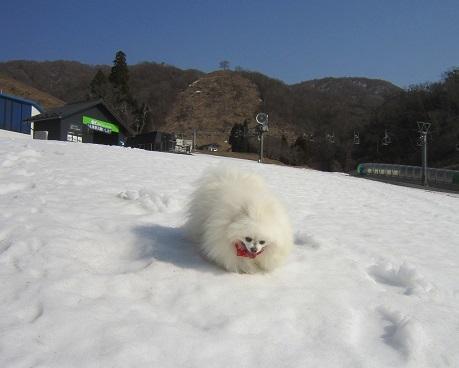 雪と桜_b0177436_22382854.jpg