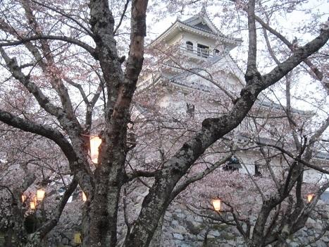 雪と桜_b0177436_22424728.jpg