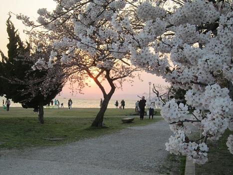 雪と桜_b0177436_22474027.jpg