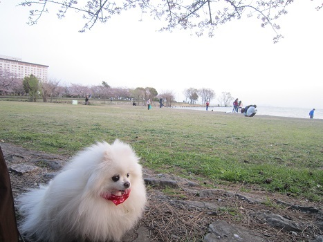 雪と桜_b0177436_22483556.jpg