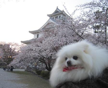 雪と桜_b0177436_22515167.jpg
