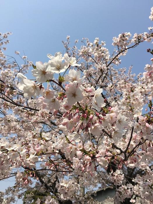 大阪ダブル選、わたし的に、完敗_e0359436_08541745.jpg