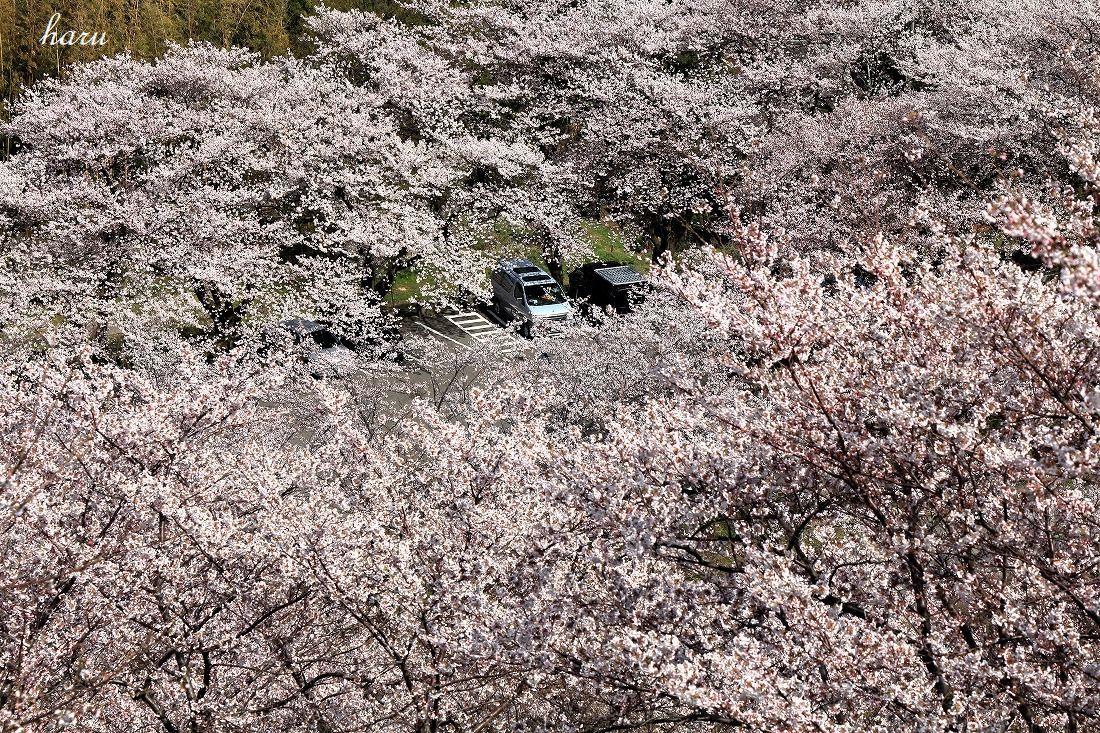 高尾城跡で花見_f0297537_20285896.jpg