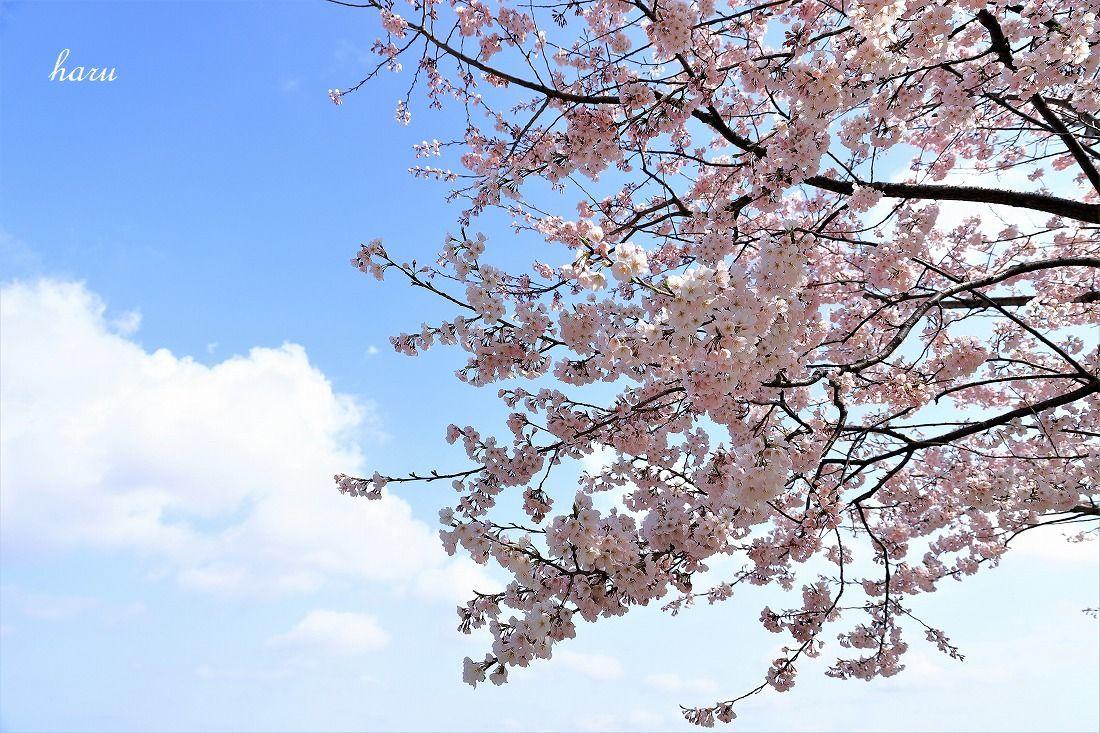 高尾城跡で花見_f0297537_20290444.jpg