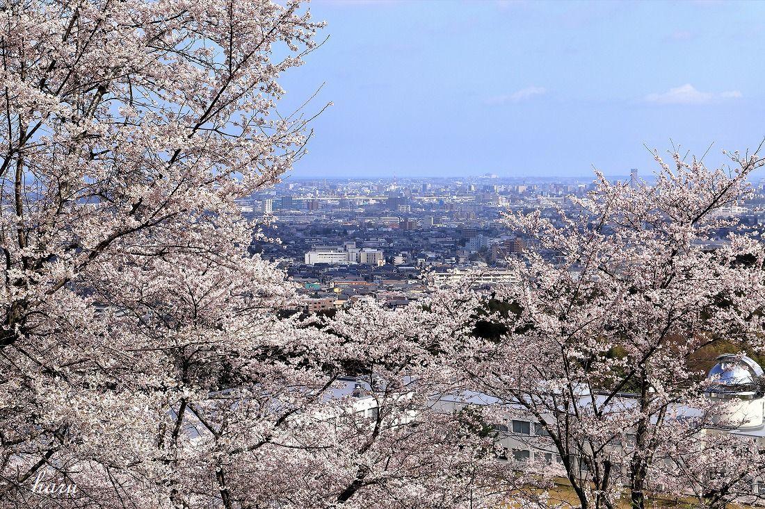 高尾城跡で花見_f0297537_20293897.jpg