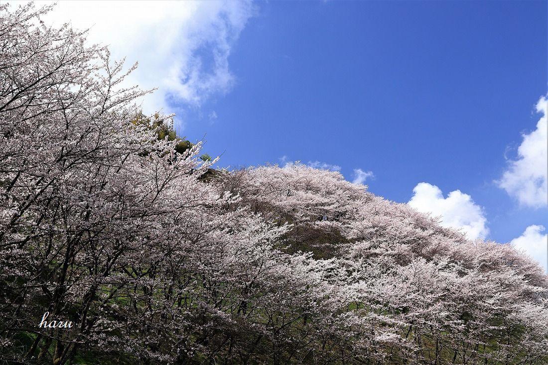 高尾城跡で花見_f0297537_20294883.jpg