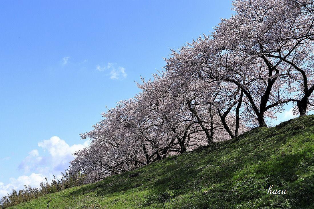 高尾城跡で花見_f0297537_20295197.jpg