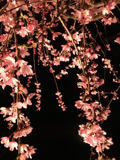 花祭りの日ですね🌸_a0271541_13191543.jpg
