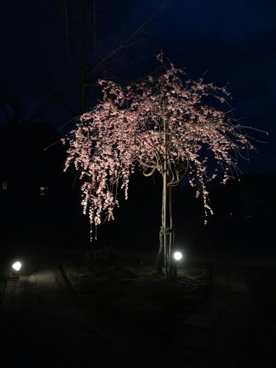 花祭りの日ですね🌸_a0271541_13193675.jpg